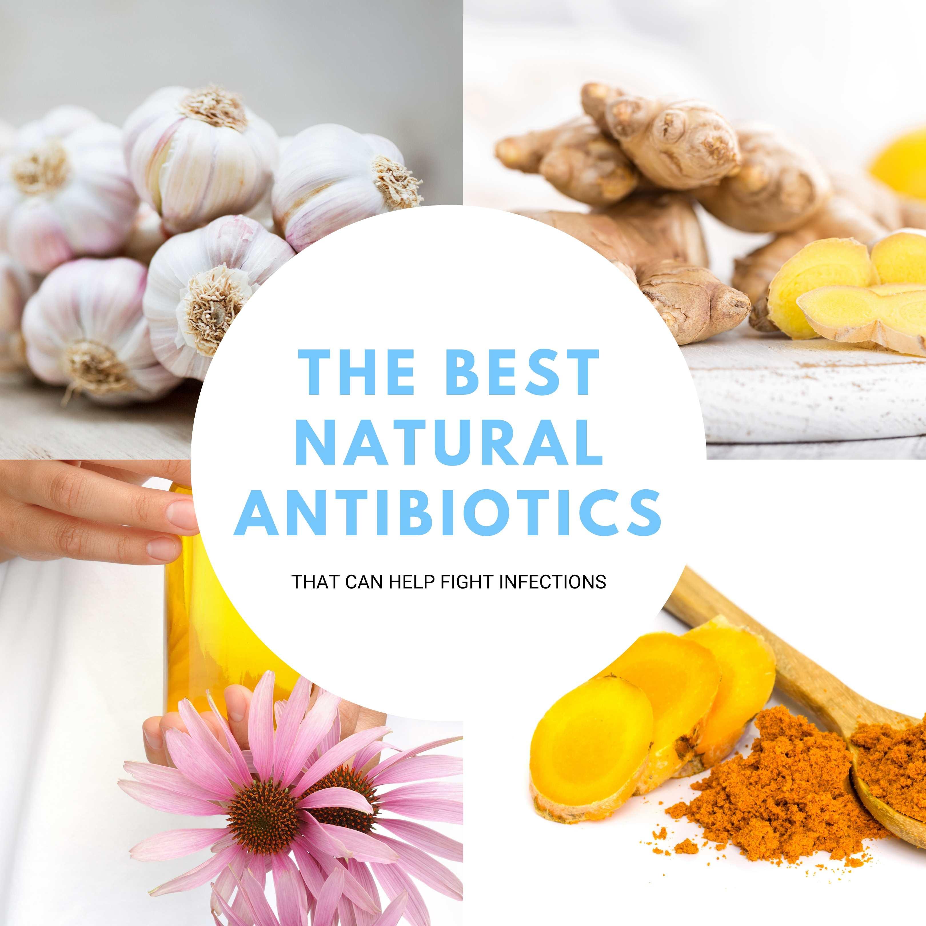The Best Natural Antibiotics